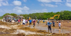 Beach cleaning in Martinique