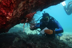 Diving with lion fish