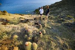 Les membres d'Energy Observer se baladent sur l'Ile Fourchue