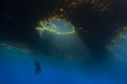 Jérôme diving under seagrass