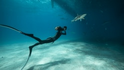 A woman is filming a shark underwater while swimming