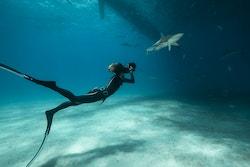 Une femme filme un requin sous l'eau tout en nageant