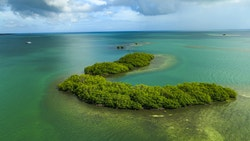 Drone view of the mangroves