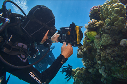 Jérôme Delafosse filming underwater in front of corals